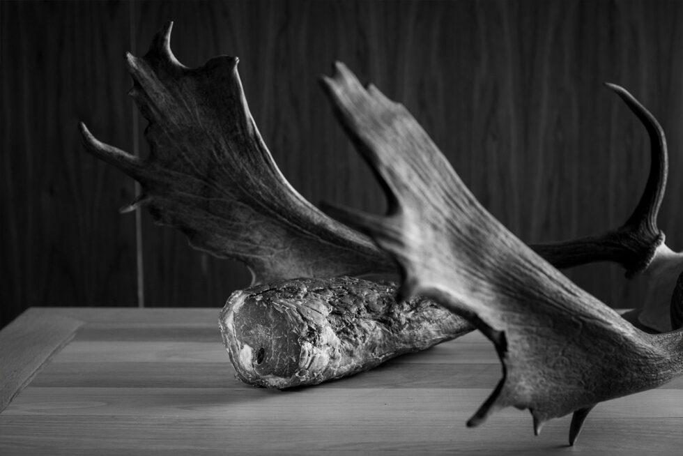 Aged Fillet Horns BW