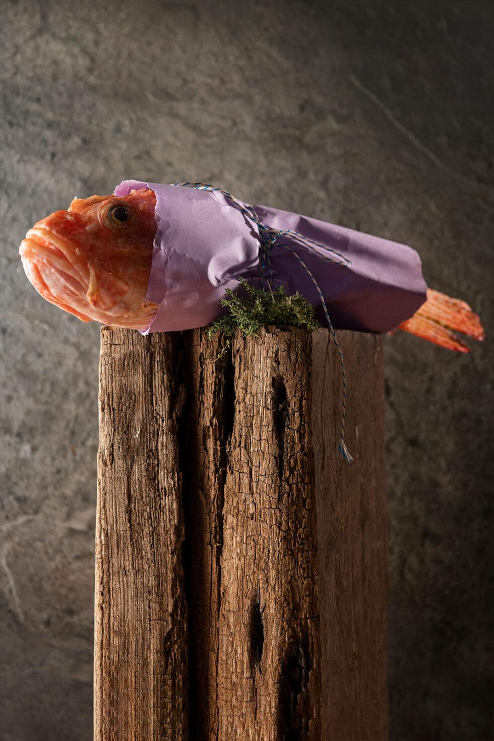 Cipulazza on a log