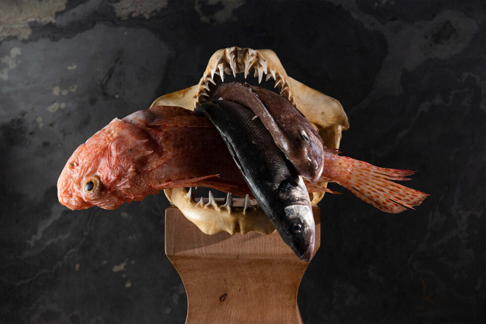 Fish in jaws