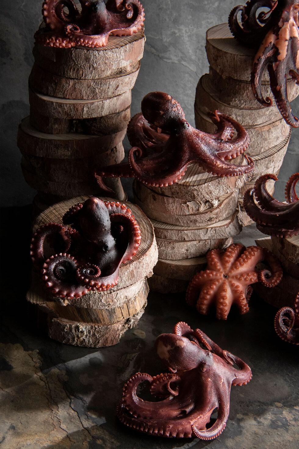 Octopus on logs again